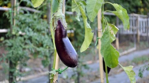 ristorante coltivazione verdure ed erbe aromatiche